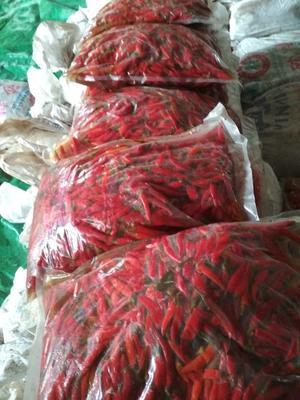 广西桂林全州县长豇豆 8~15cm以上 不打冷