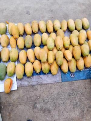 广西崇左龙州县红心木瓜 1.5 - 2斤