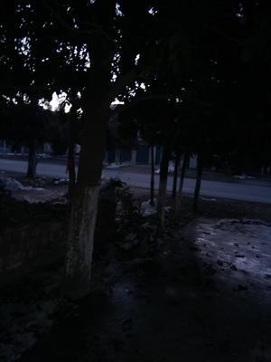 河南南阳镇平县广玉兰