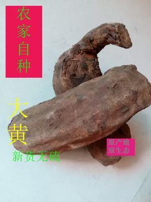 甘肃省陇南市武都区大黄