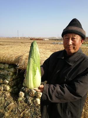 河北省唐山市玉田县包尖白菜 3~6斤 净菜