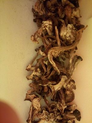 甘肃武威古浪县蘑菇