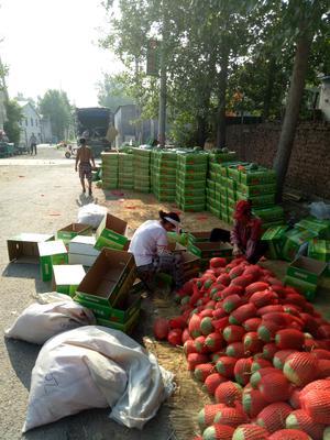 山东潍坊寒亭区L600西瓜 有籽 1茬 9成熟 3斤打底