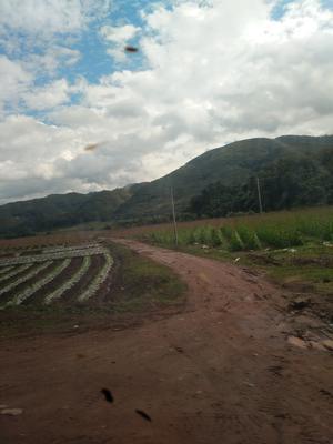 云南省西双版纳傣族自治州勐海县绿扁豆 2cm以上 15cm以上