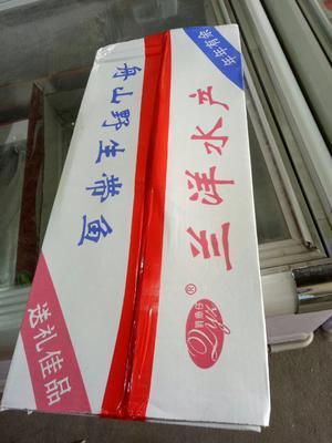 山东滨州沾化区舟山带鱼 野生 0.5公斤以下