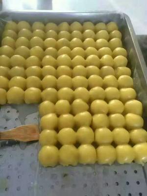 吉林长春德惠市粘豆包 3-6个月