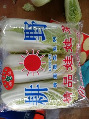 河南省漯河市郾城区高山娃娃菜 5~7两以上