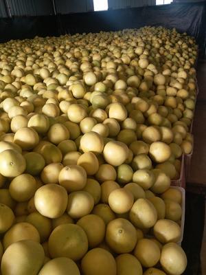 四川眉山东坡区蜜柚 2斤以上