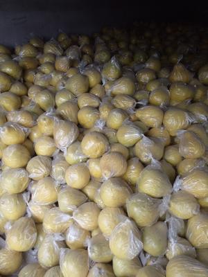 广西来宾象州县沙田柚 1.5斤以上