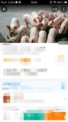 辽宁盘锦双台子区长白仔猪
