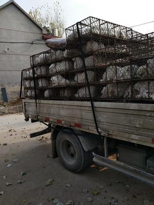 山东临沂沂水县兔肉类 1个月 新鲜
