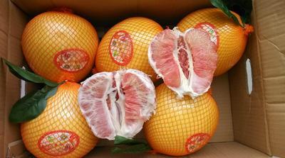 湖北荆州公安县红心柚 2斤以上