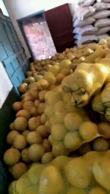 湖南常德澧县蜜柚 2斤以上