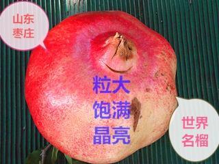 山东枣庄峄城区枣庄石榴 0.8 - 1斤