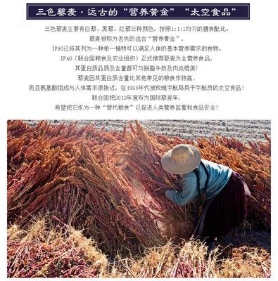 山西忻州静乐县三色藜麦