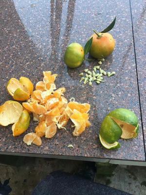 江苏省宿迁市沭阳县柑橘种子