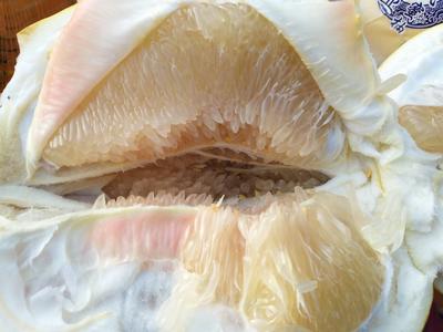 山东淄博临淄区蜜柚 2斤以上