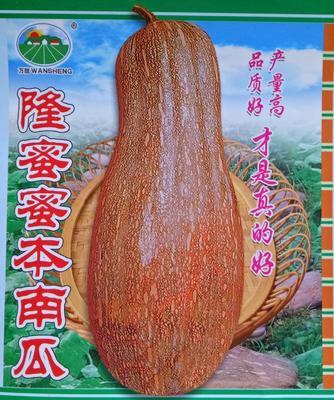 广东湛江雷州市蜜本南瓜种子 95%