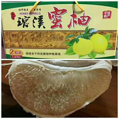 福建漳州平和县蜜柚 2斤以上