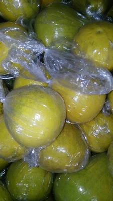 广东梅州梅县区沙田柚 1.5斤以上