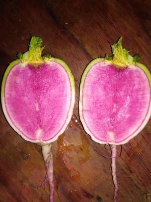 安徽省宿州市灵璧县心里美萝卜 0.2~1斤