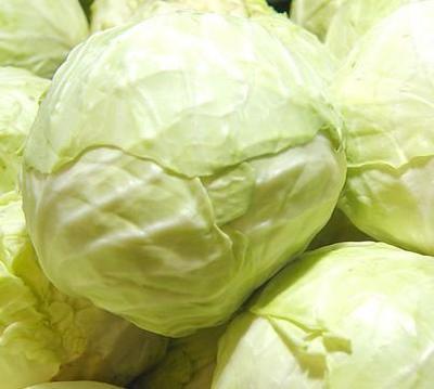 海南省海口市美兰区卷心包菜 1.5~2.0斤