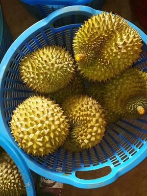 广西崇左凭祥市金枕头榴莲 80 - 90%以上 3 - 4公斤