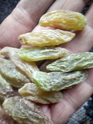 新疆吐鲁番吐鲁番市绿香妃葡萄干 优等