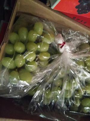 河北石家庄晋州市阳光玫瑰 5%以下 1次果 0.8-1斤