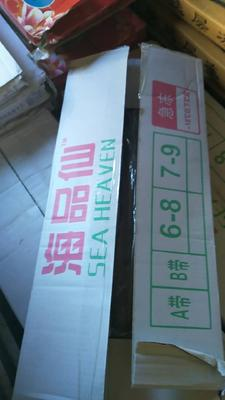 天津武清东海带鱼 野生 0.5公斤以下