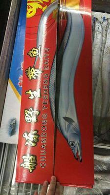河北张家口桥西区舟山带鱼 野生 0.5公斤以下