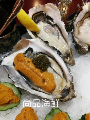 广东珠海斗门区法国生蚝 野生 3-5只/公斤