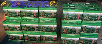 广东惠州惠城区梅菜 6-12个月
