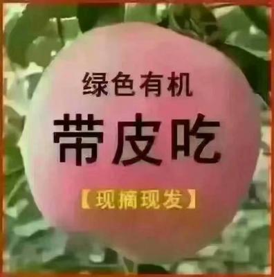 这是一张关于红富士苹果 膜袋 片红 75mm以下的产品图片