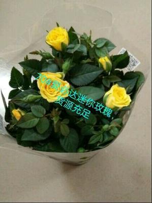 广东广州荔湾区钻石玫瑰