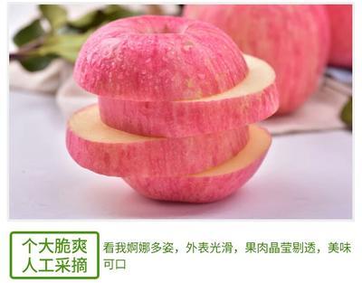 山西运城临猗县红富士苹果 纸+膜袋 表光 80mm以上