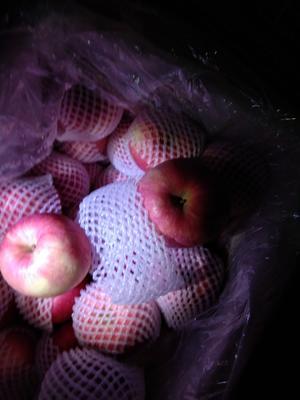 甘肃平凉泾川县红富士苹果 纸袋 条红 75mm以上