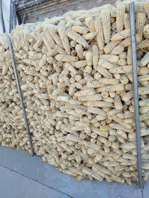 河北廊坊三河市白粘玉米2000 霉变≤1% 毛货