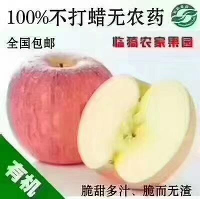 山西运城临猗县红富士苹果 膜袋 片红 75mm以下