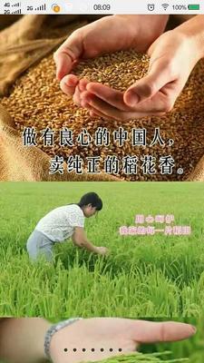 这是一张关于稻花香二号大米 绿色食品 中稻 一等品的产品图片