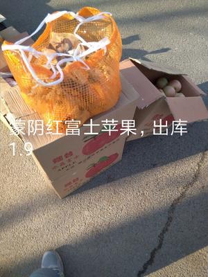 山东临沂蒙阴县红富士苹果 纸袋 条红 80mm以上