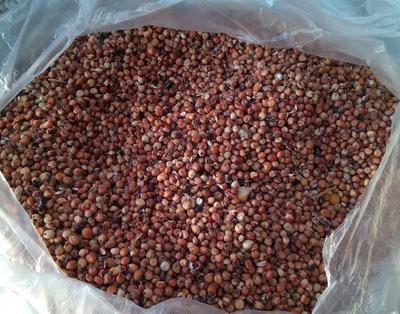 这是一张关于红高粱 霉变 ≤1% 1等品 的产品图片