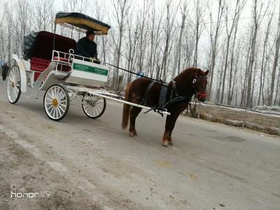 天津北辰肉马 600-800斤