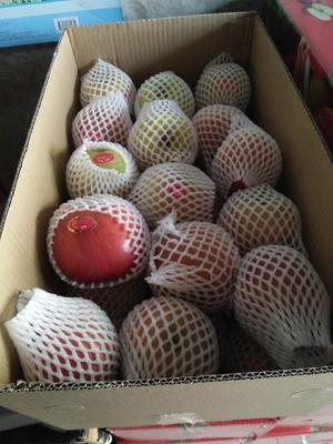 湖南长沙岳麓区冰糖心苹果 膜袋 片红 75mm以下