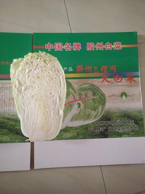 山东省青岛市胶州市胶州大白菜 6~10斤 净菜