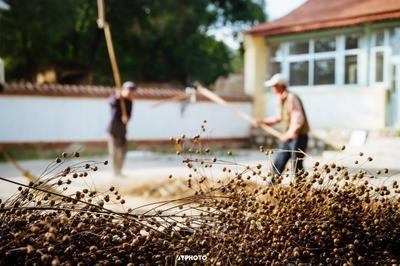 甘肃兰州城关区有机亚麻籽油