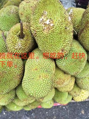海南万宁万宁海南小菠萝蜜尖蜜拉 10斤以下