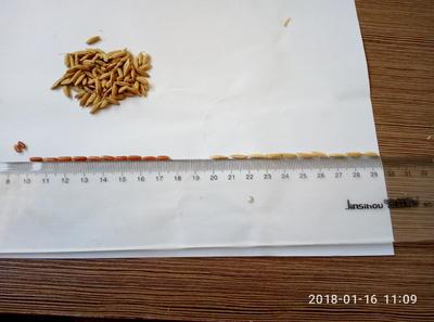 云南昆明官渡区红糙米 绿色食品 晚稻 一等品