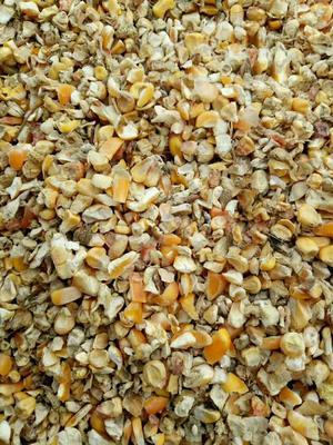山东聊城阳谷县玉米干粮 霉变>2% 杂质很少
