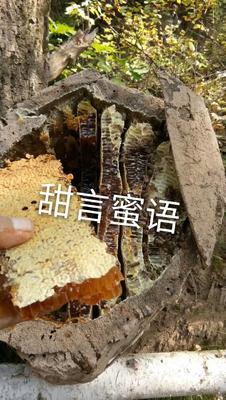 甘肃庆阳合水县土蜂蜜 塑料瓶装 100% 2年以上